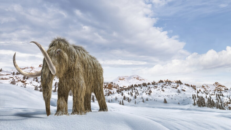 Artist's impression of a woolly mammoth in a snow-covered environment.