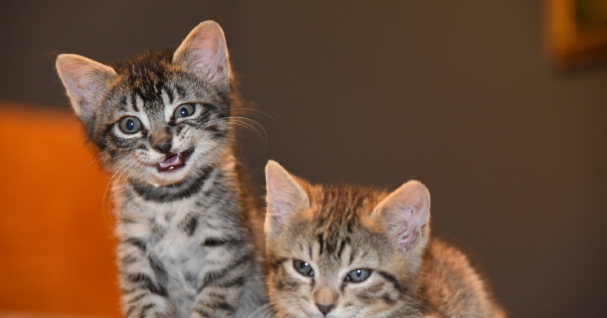 La Is In The Midst Of A Kitten Crisis Here S How You Can Help Laist